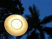 Lamp Against Palm Tree Sky