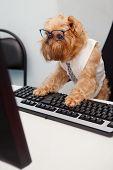 Dog Manager