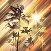 Palm tree landscape