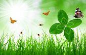 Grama verde fresca com trevo e borboletas