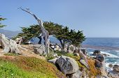 The Ghost Tree At 17 Mile Drive