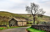 Barn and tree in the Yorkshire Dales