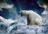 stock photo of hunters  - White Polar Bear Hunter on the Ice in water drops - JPG