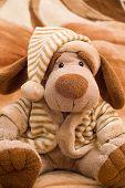 Dog Toy Portrait