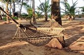 Tropical Garden Landscape Hammocks Coconut Trees