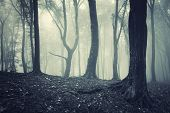 Dark forest with fog