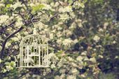 Open birdcage with feathers in tree with apple blossom
