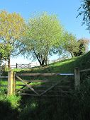 Rural Gates Landscape