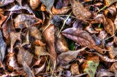 Dry Fallen Autumn Leaves Background In Hdr High Dynamic Range