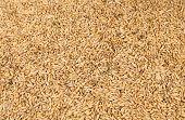 Background of wheat grain.