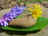 Stone and flowers.
