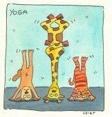 Yoga-tiere
