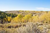 pic of sagebrush  - Blazing fall colors adorn the quaking aspens on the sagebrush steppe of the western Rocky Mountains - JPG