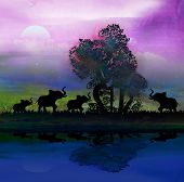 Silhouette Of Elephants In Africa Theme Setting With Beautiful Colorful Sunset