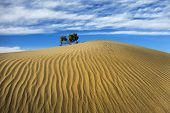 pic of mesquite  - Rippling golden sand of Mesquite Flat Dunes Death Valley - JPG