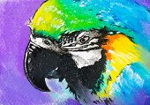 Original Pastel Paintings On Cardboard. Parrot.