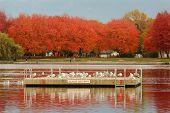 Trout Lake, John Hendry Park, Vancouver