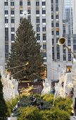 Rockefeller Center Christmas Tree and statue of Prometheus at the Lower Plaza of Rockefeller Center
