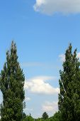 The Sky With Clouds And Trees