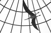 stock photo of pterodactyl  - Pterodactyl flying trapped inside an aviary or building - JPG