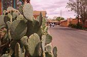 Cactus Road