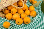 picture of loquat  - A small basket full of freshly harvested loquats - JPG