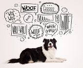 stock photo of collie  - Cute black and white border collie with barking speech bubbles above her head - JPG