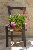 Flower On A Wooden Chair