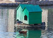 Two Home For Waterfowl