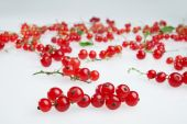 red currants close up