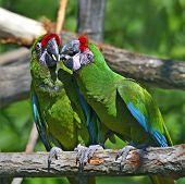 Beautiful Pet Parrot