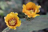 Cactus Spring Blossom.