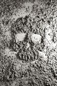 image of ashes  - Human skull made of grey wooden ash - JPG