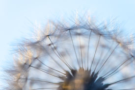 stock photo of blown-up  - blown dandelion flower head close up against the sky [[** Note: Visible grain at 100%, best at smaller sizes ** Note: Soft Focus at 100%, best at smaller sizes - JPG