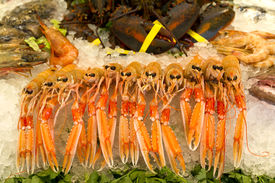 picture of norway lobster  - Lobsters prawns and shrimp crustaceans on crushed ice - JPG