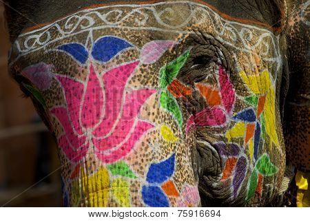 Elephant makeup