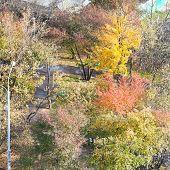 Multicolored Trees In Public Garden In Autumn