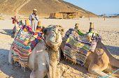 The Curious Camel