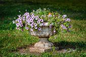 flower pot in the park