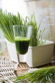 Fresh Wheatgrass With Wheatgrass Juice