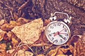 stock photo of pass-time  - Vintage alarm clock in dry autumn leaves Passing of time and season change concept - JPG