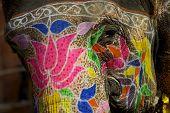 Colorful elephant makeup in Jaipur, Rajasthan, India.