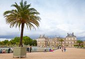 Palm Tree In The Pot. Luxembourg Garden, Paris