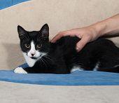 Black And White Kitten Lying On Sofa