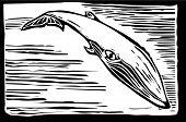 Baleia-sei
