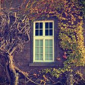 picture of ivy vine  - Climbing vines of ivy on a house vintage look - JPG
