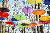 Bright umbrellas on trees, blue sky.