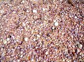 picture of beach shell art  - Abstract of shells on beach in rock pool - JPG