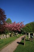 Springtime in the Churchyard