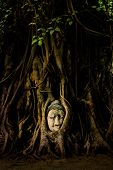 Buddha Head Statue in Tree Roots
